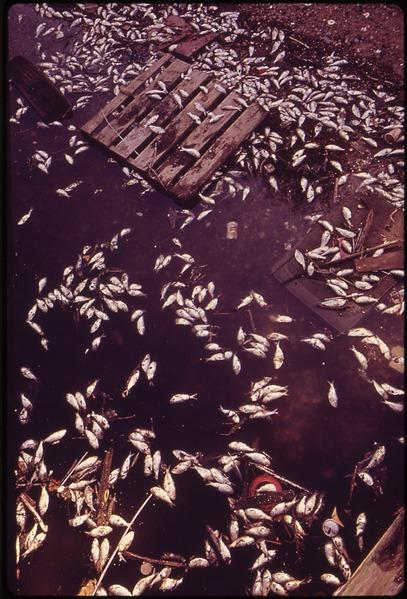 dead%2520fish.jpg