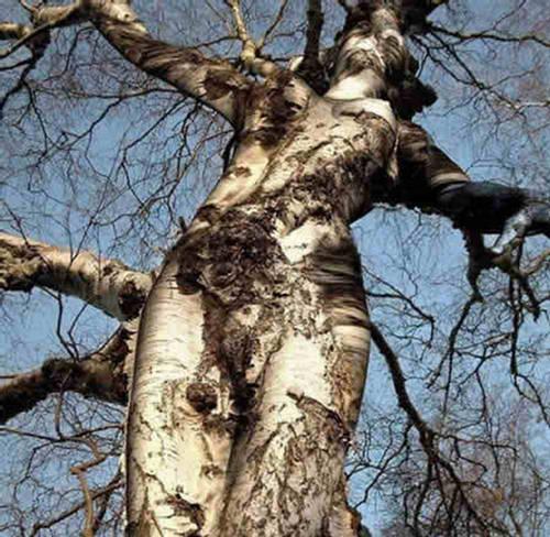 strange_trees.jpg